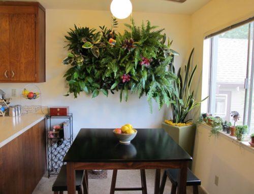 Sacramento Residence living wall