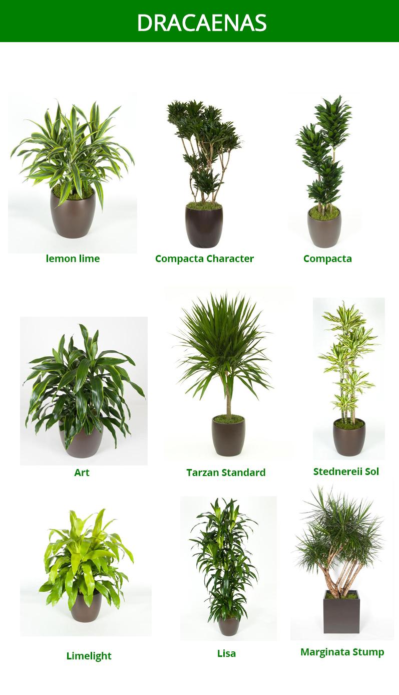 Delicieux Interior Plants