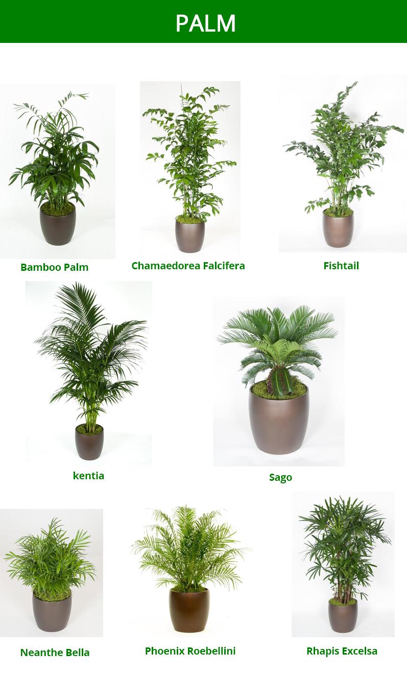 Imagine Plant Design And Interior Plant Service