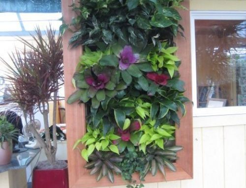 Small Living Wall